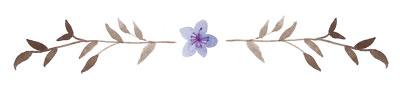 flower-sep